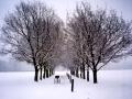 a-trike-in-winter